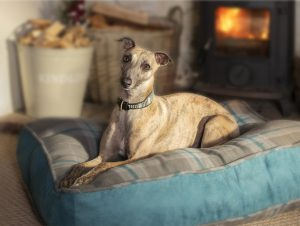 Greyhound in front of fire